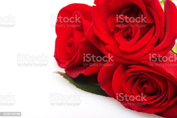 Rose picture id1028733296?b=1&k=6&m=1028733296&s=612x612&h=uuvwd chtqdxqtkccb4sgeuqf6bwwtmddjyvbnwm4tc=
