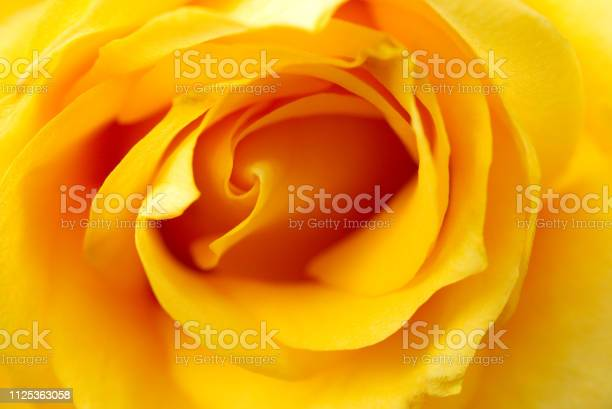 Rose picture id1125363058?b=1&k=6&m=1125363058&s=612x612&h=2j7rsm4r9hpnjzbuyrobutlmkz2vhqocmt3w6ufvh9k=