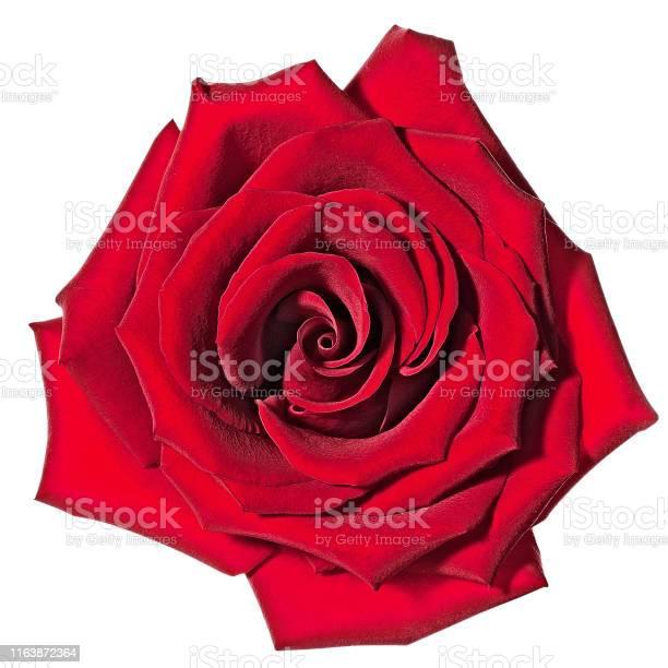Rose picture id1163872364?b=1&k=6&m=1163872364&s=612x612&h=r3s zkext3iq3funxjsyiqzty2oava23n7gypjrzeje=