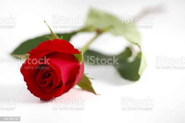Rose picture id145192737?b=1&k=6&m=145192737&s=612x612&h=ax6mc1zapyjtwrv7johrkhxlkbpw9hwzlracj1fmkng=