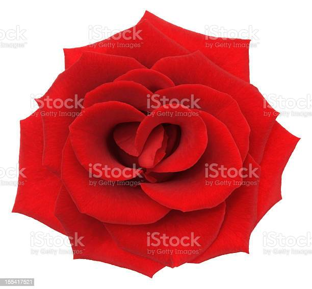 Rose picture id155417521?b=1&k=6&m=155417521&s=612x612&h=eoiaycba qlen7jt99iyewwd4wii168bcvu8zvb9dc8=