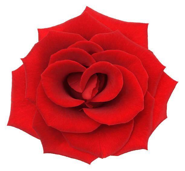 Rose picture id155417521?b=1&k=6&m=155417521&s=612x612&w=0&h=4xlngg8clvlod xretkhcbztfq2t8wkcx4ihmgertu8=