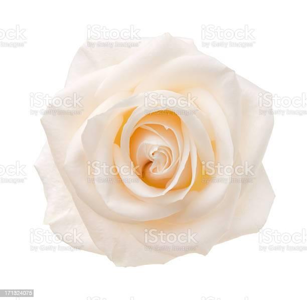 Rose picture id171324075?b=1&k=6&m=171324075&s=612x612&h=kqndud3d8pj9zvylz65qm2ivbaznlvu tvyvmlnlzcu=