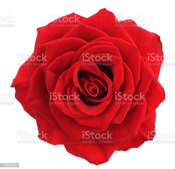 Rose picture id173242371?b=1&k=6&m=173242371&s=612x612&h=wqeb0ey 3c1d 1lyzfeb74xo3kqcuybeqb2ghpg5aws=