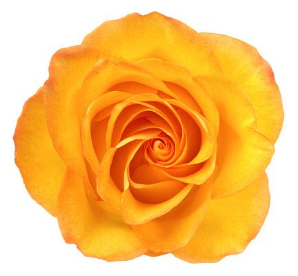 Orange flower on a white background.