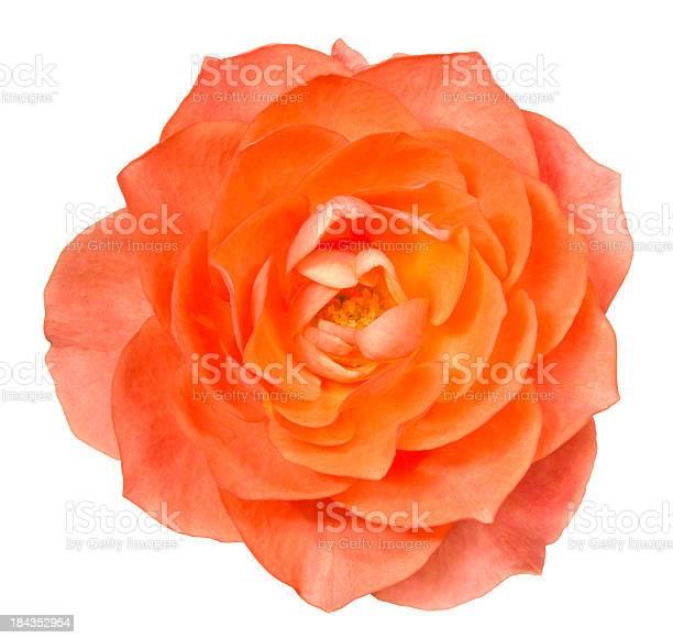 Rose picture id184352954?b=1&k=6&m=184352954&s=612x612&h=vjwgm8fpshdfwcg04ilsbnt10n7robnhfg86dpskehk=