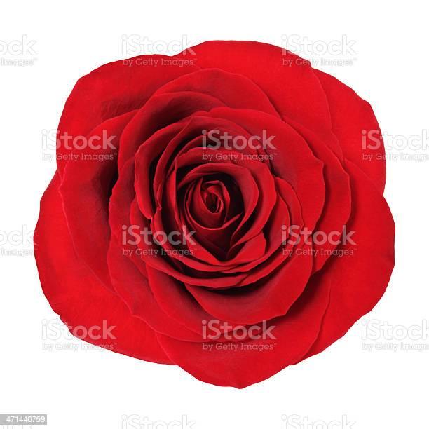 Rose picture id471440759?b=1&k=6&m=471440759&s=612x612&h=gd8wtvdo8ucetf4jzaouqb7b1uqyyfhoa8a rvrram4=