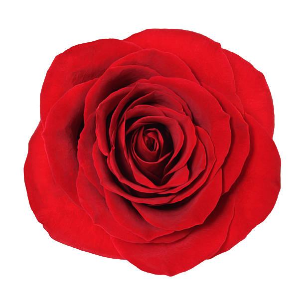 Rose picture id471440759?b=1&k=6&m=471440759&s=612x612&w=0&h=5iiv8gj7kppitm02n69vvui iyuf i 3tllypguuy8m=