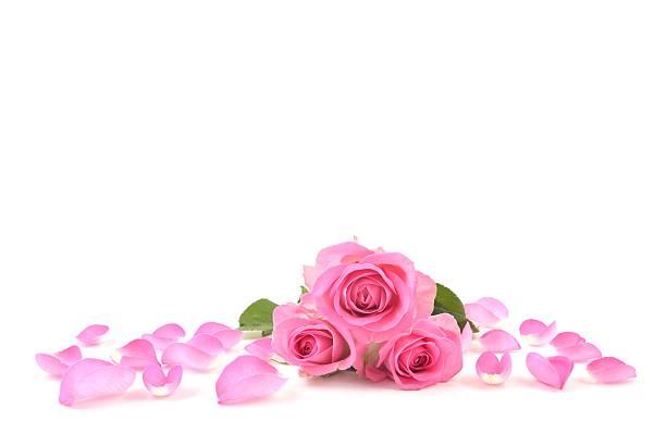 Rose picture id516137348?b=1&k=6&m=516137348&s=612x612&w=0&h=iktlw3up3yna50rjdsv69jbcpwkvb3k93grvywacsy8=