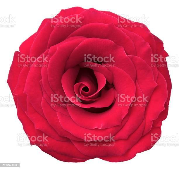 Rose picture id529574941?b=1&k=6&m=529574941&s=612x612&h=jo7cyikbkp9wvhppqwravao5tw0bzkebpq43api1rcu=