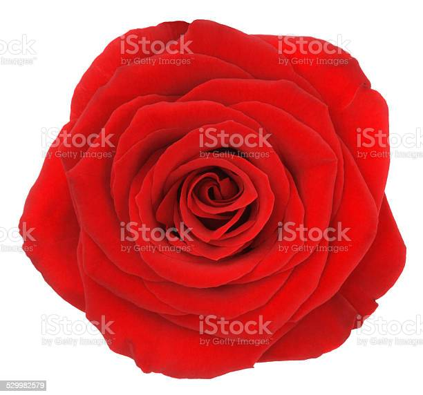 Rose picture id529982579?b=1&k=6&m=529982579&s=612x612&h=oc0trs78pz4wbgbihvameci  s6yzw8jodlpvzpj5mm=