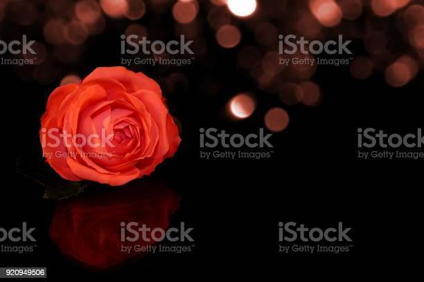 Rose picture id920949506?b=1&k=6&m=920949506&s=612x612&h=1gptl9hppxbx5jxdjcqu jebkytm4eotr33cg5tm hw=