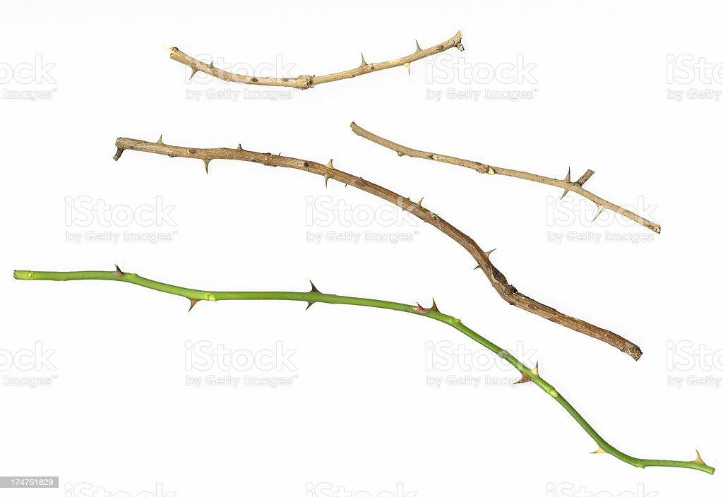 Rose Thorns - Royalty-free Bizar Stockfoto