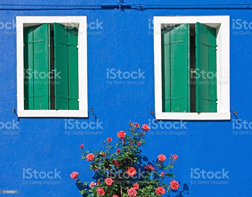 Rose under windows royalty-free stock photo