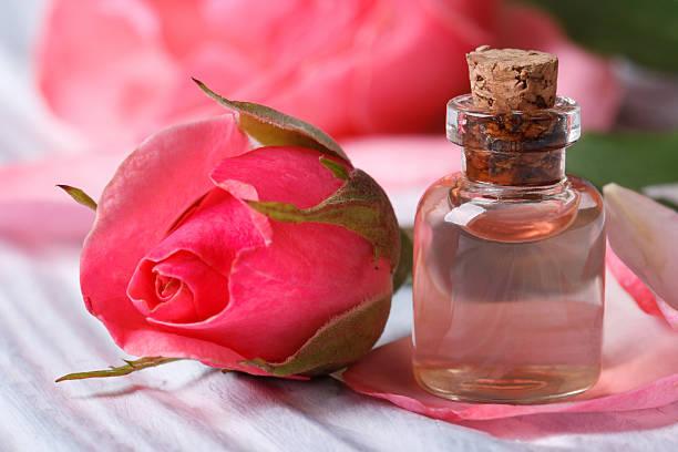 Rose water and pink beautiful flower macro horizontal stock photo