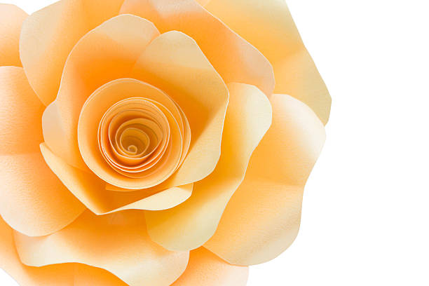 rose with gradient stock photo