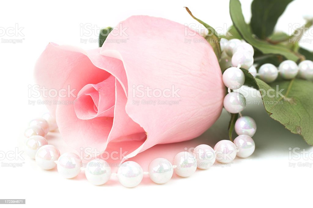 Rose with pearls royalty-free stock photo