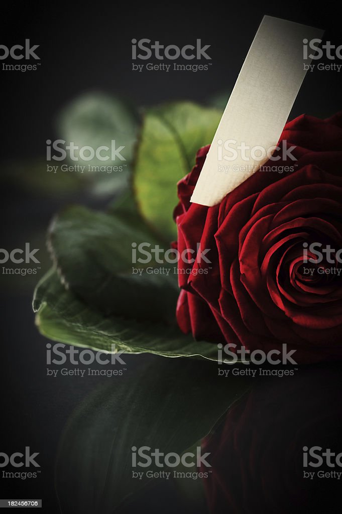 Rose with tag royalty-free stock photo