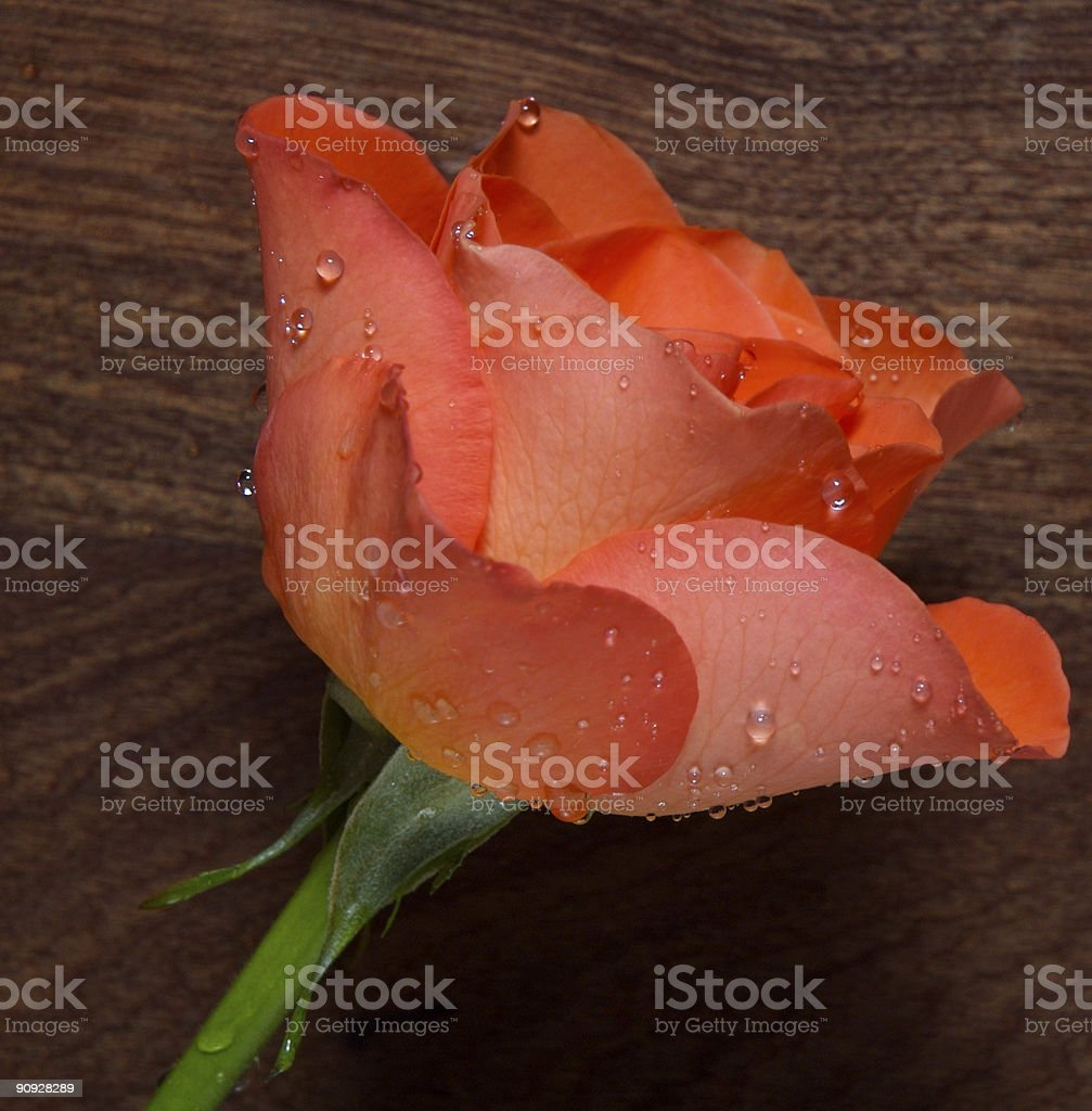 Rose with wood background stock photo
