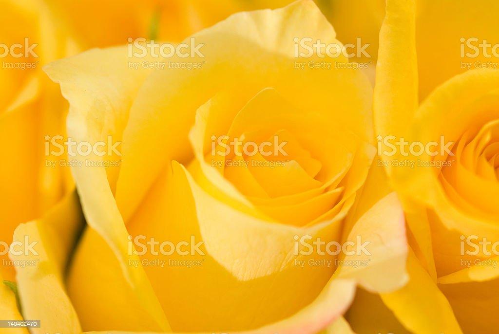 Rose yellow macro detail photo - more in portfolio royalty-free stock photo