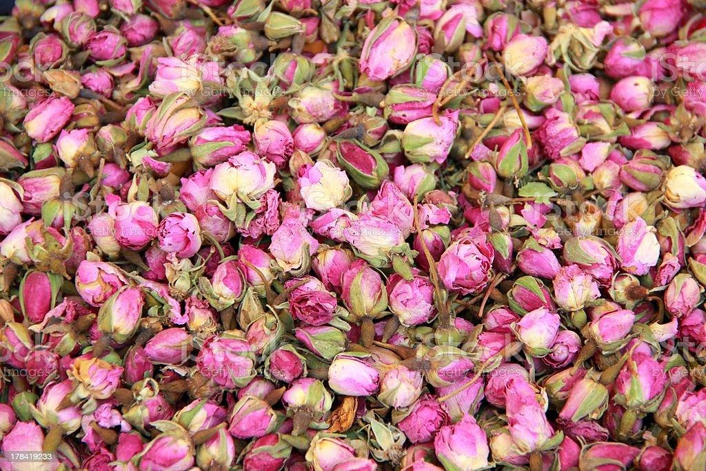 Rosebuds stock photo