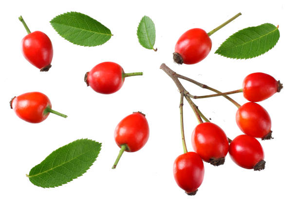 rosehip berries with green leaves isolated on white background. Top view rosehip berries with green leaves isolated on white background. Top view dog rose stock pictures, royalty-free photos & images