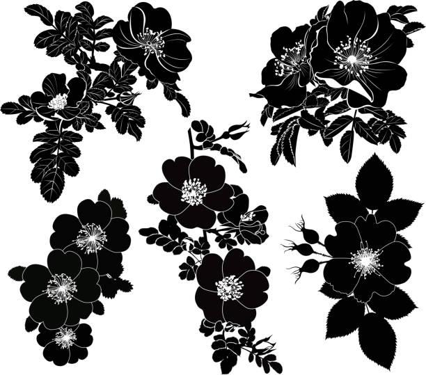 rosehip farbe set isoliert auf weißem hintergrund - tatto vorlagen stock-fotos und bilder