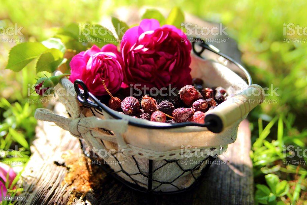 плоды шиповника stock photo