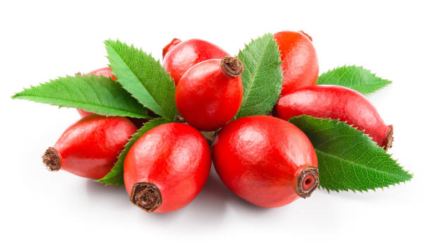 Rosehip Rosehip. Rosehip isolated on white. Berries with leaves. dog rose stock pictures, royalty-free photos & images