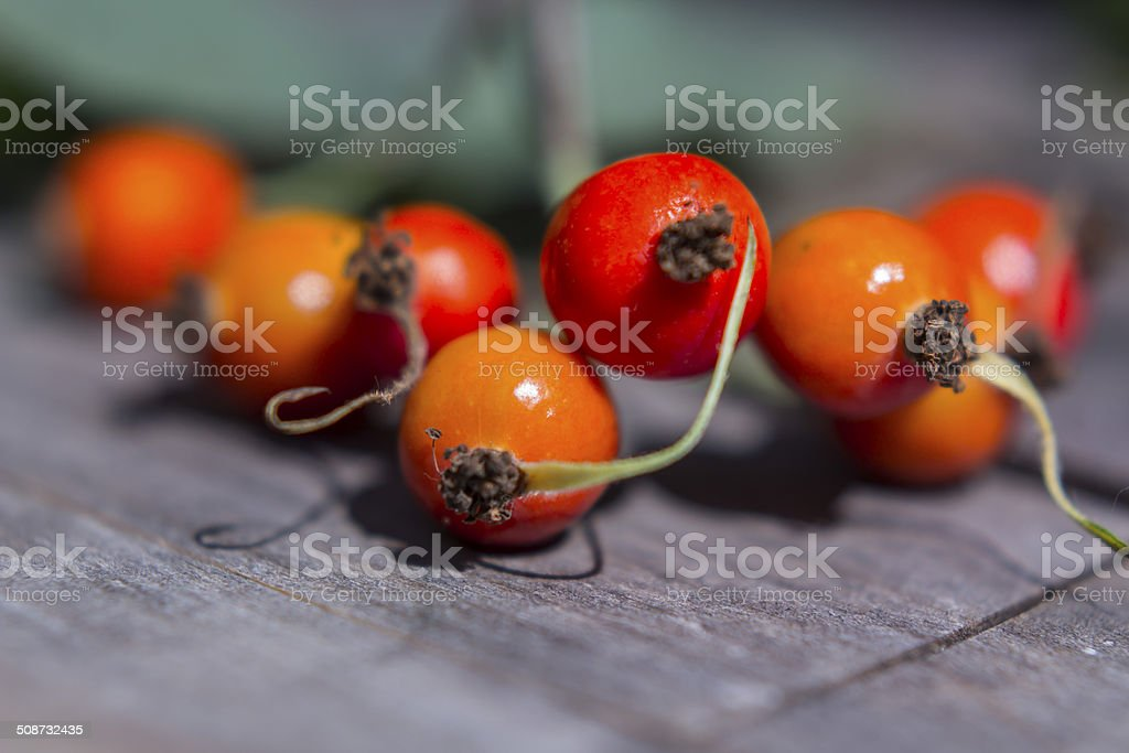 Rosehip stock photo