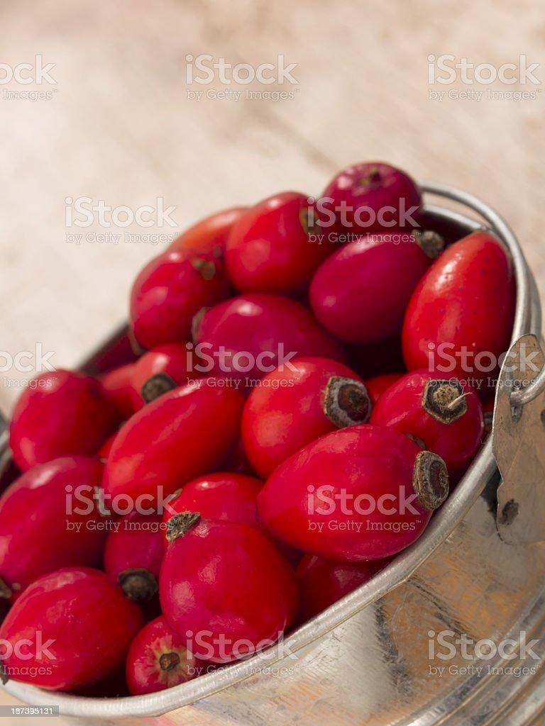 rosehips in the metal bucket stock photo