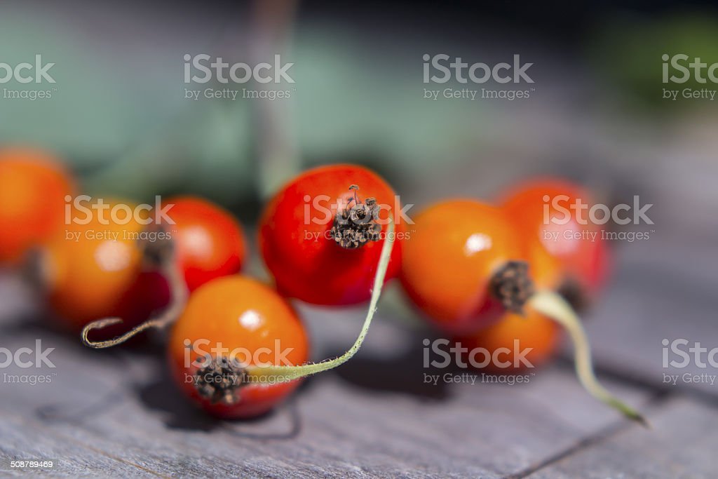 Rosehips stock photo