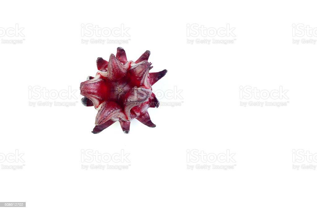 Roselle flower stock photo