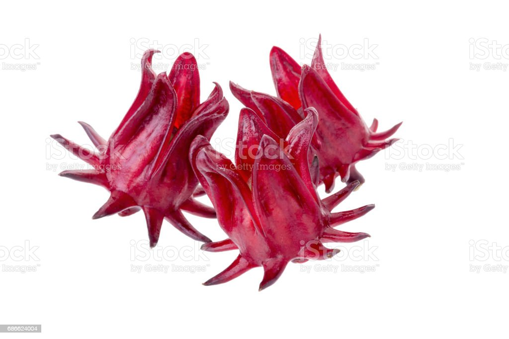 Roselle Hibiscus sabdariffa red fruit flower on white background royalty-free stock photo