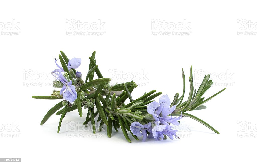 Rosemary branch and flowers royalty-free stock photo