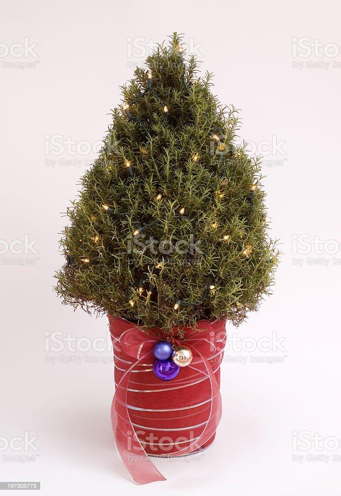 Rosemary Bush Christmas Tree royalty-free stock photo
