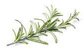 rosemary herb closeup isolated on white background. Studio image of spicy vegetable and herb, healthy natural organic food