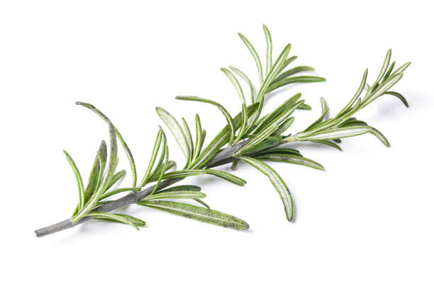 Cтоковое фото rosemary herb closeup isolated on white background