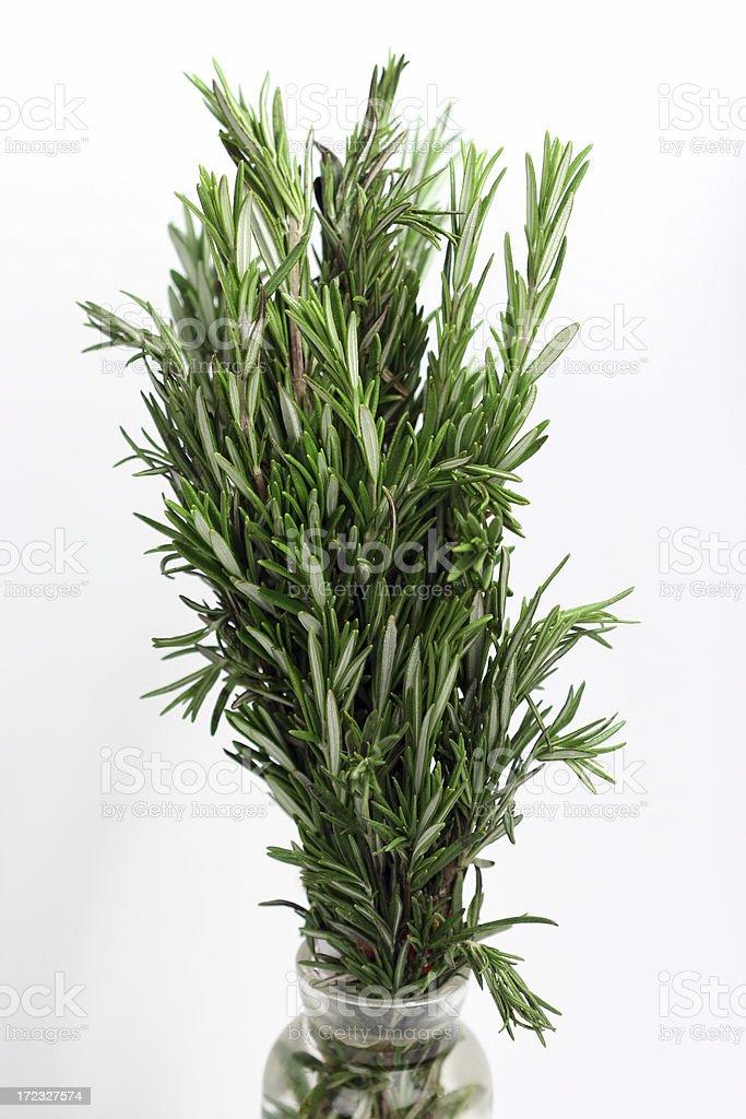 Rosemary in Vase royalty-free stock photo