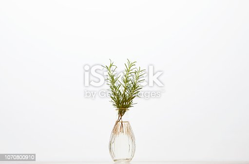 Rosemary inserted in a vase