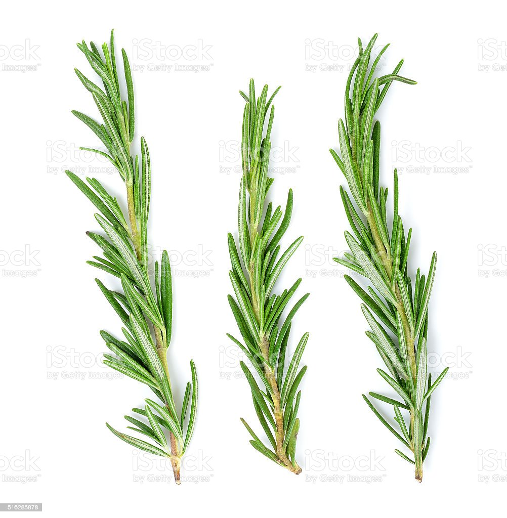 rosemary isolated on the white background stock photo