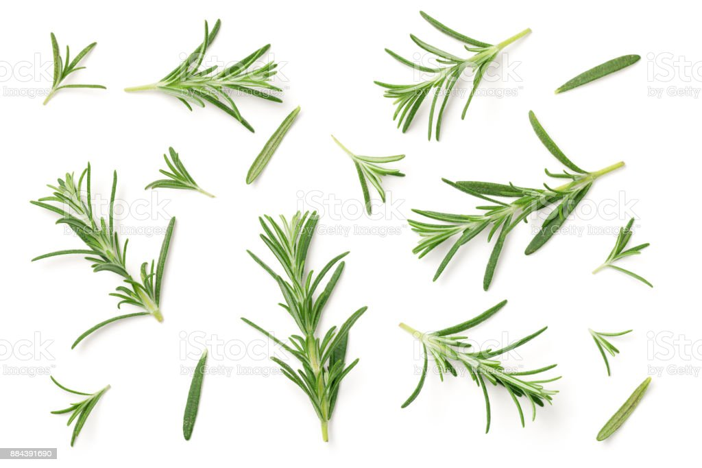 Rosemary Isolated on White Background stock photo