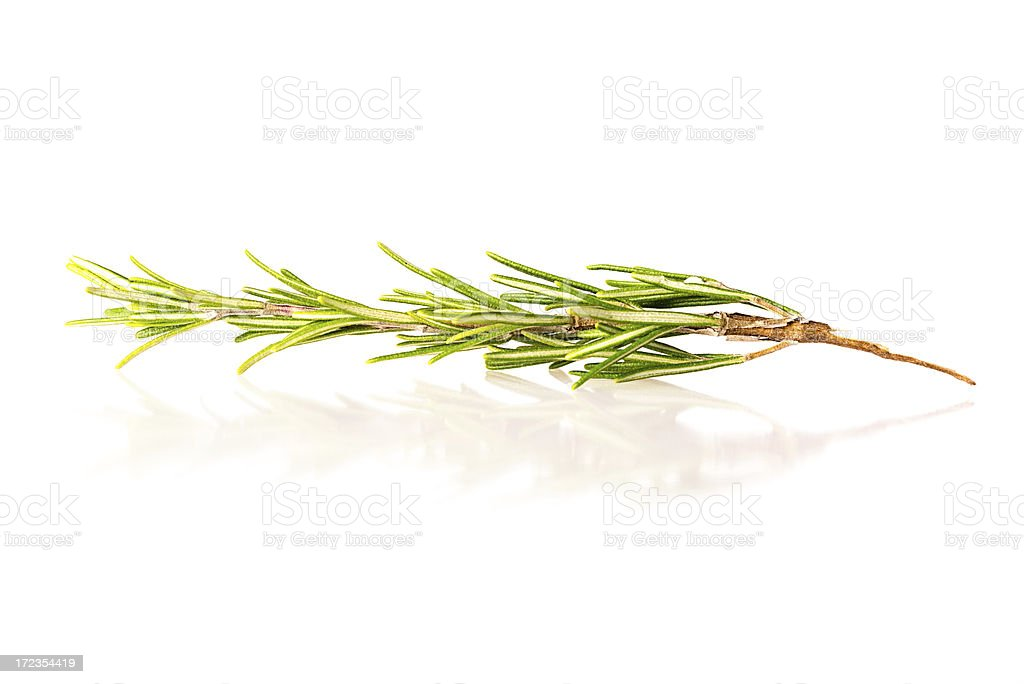 Rosemary isolated on white royalty-free stock photo