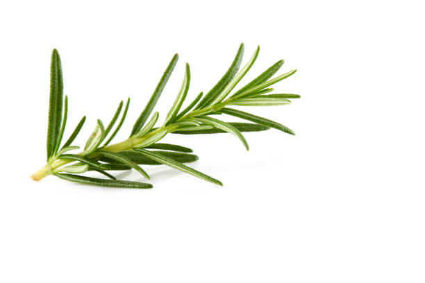 Cтоковое фото Rosemary isolated on white