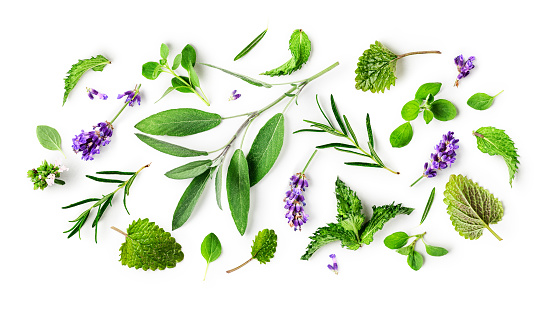 Rosemary, lemon balm, lavender, mint, sage and marjoram collection. Creative pattern with fresh herbs on white background. Flat lay. Floral design. Healthy eating and alternative medicine concept