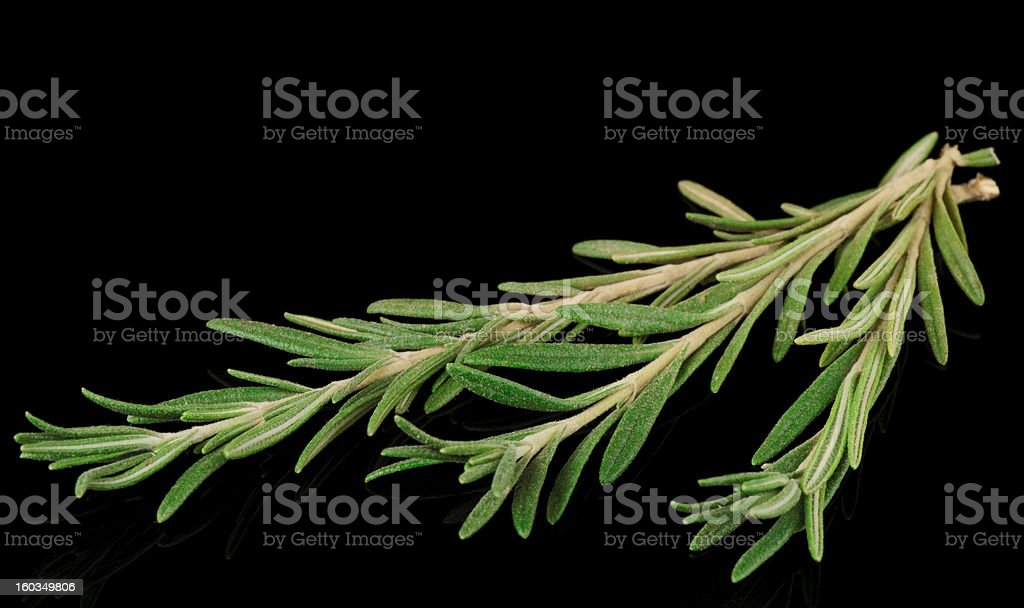 Rosemary on black reflective surface stock photo