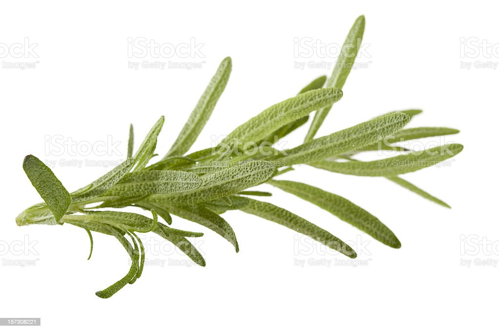 Rosemary on white royalty-free stock photo