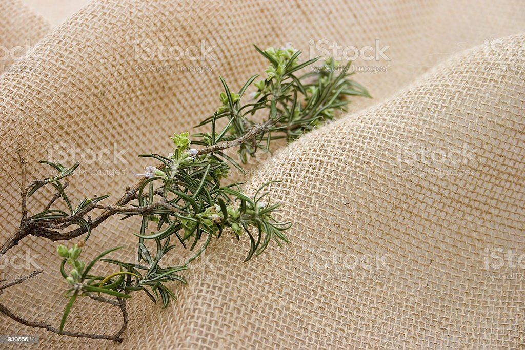 Rosemary organic royalty-free stock photo