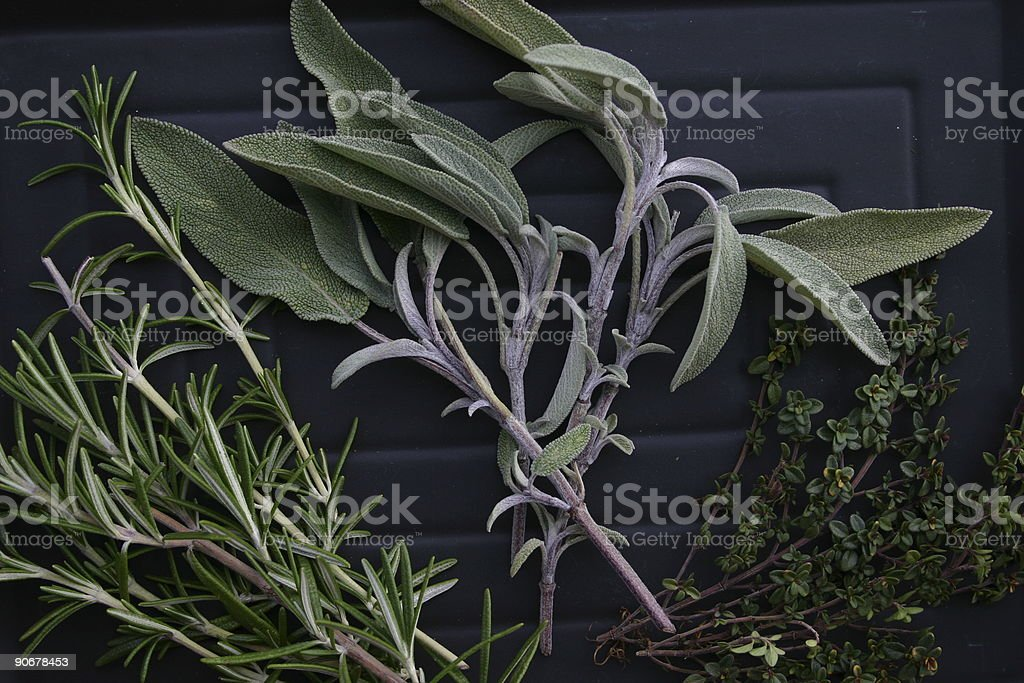 Rosemary Sage And Thyme royalty-free stock photo