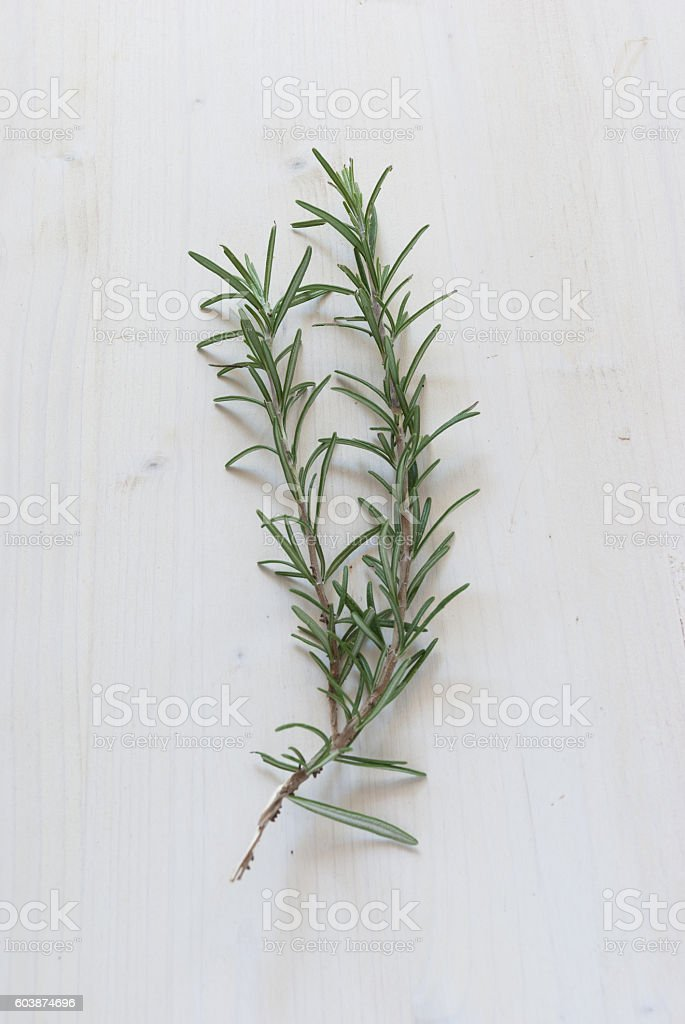 Rosemary Spice stock photo